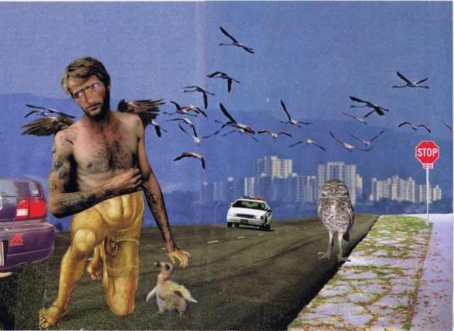 Owl killer, collage